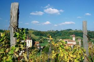 vinograd-300x200